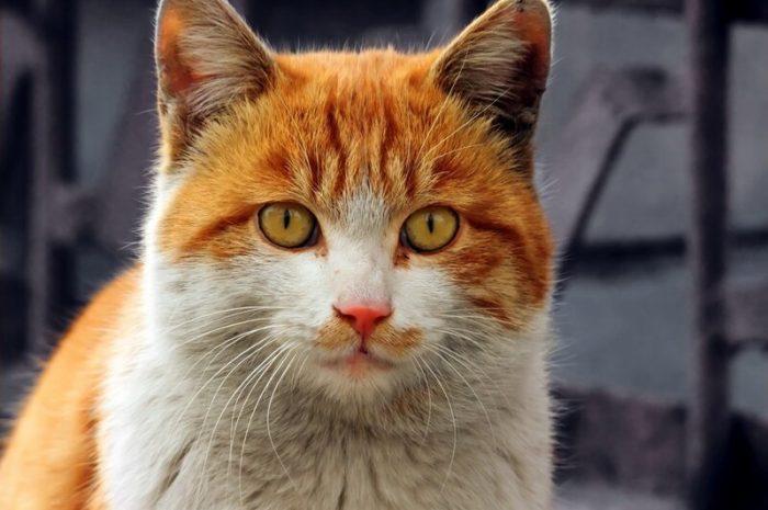 Китайские фото-коты