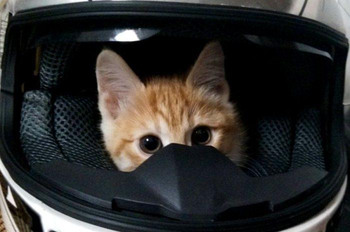 Как перевозить кошку по Китаю