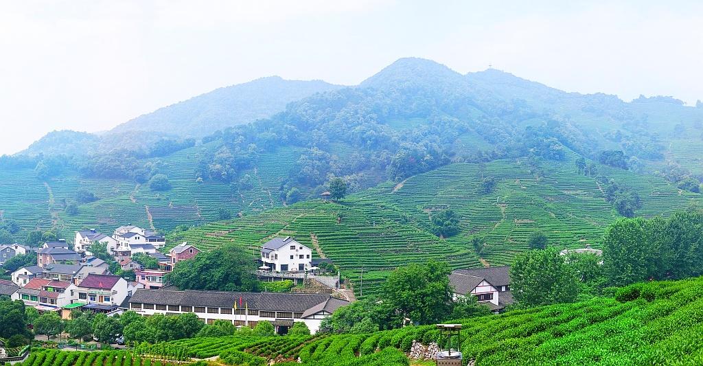 hangzhou_longjing_preview